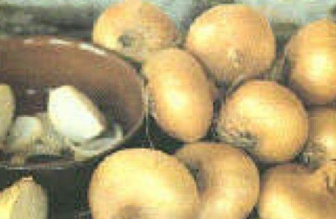 Ricette: Torta di cipolle