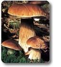 Funghi: conservazione e nozioni