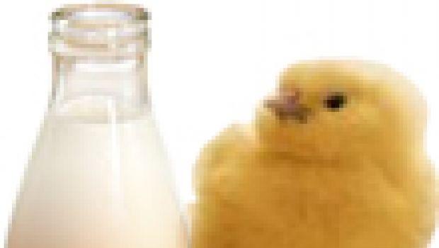Latte di gallina&co.