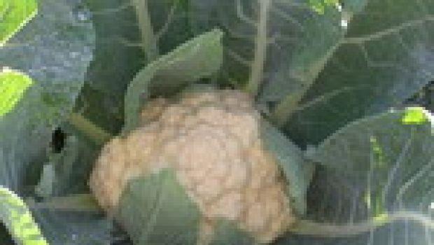 Le verdure di una volta, a casa vostra
