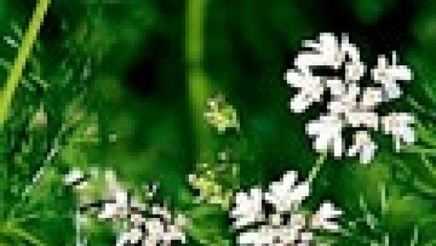 Il coriandolo…di carnevale