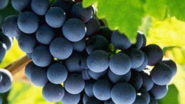 Post Di Vino: Mini guida all'acquisto dell'uva
