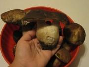 La stagione dei funghi, la 'carne dei poveri'