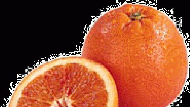 L'arancia: il frutto preferito dall'elefante