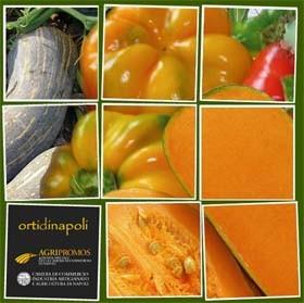 Ortaggi e legumi tipici della cucina napoletana