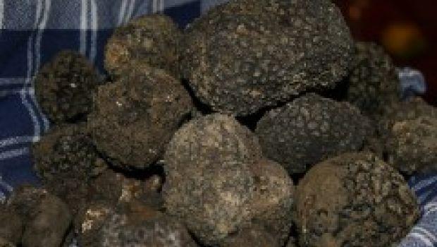 """""""Diamante nero"""": Scheggino celebra il tartufo della Valnerina"""