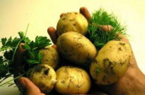 La ricetta delle patate in tecia