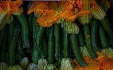 Ricette secondi: Zucchine grigliate in salsa tonnata