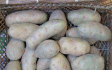 La ricetta del timballo dolce di patate