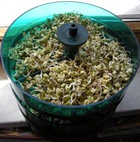 Ricetta fresca dell'insalata di lattuga, spinaci e germogli di soia