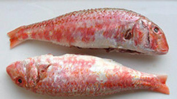 Ricette pesce: triglie a vapore