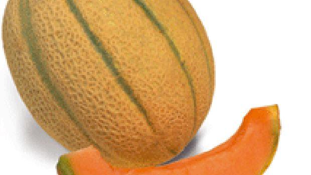Ricetta per un antipasto leggero e sofisticato: il sorbetto di zenzero e melone