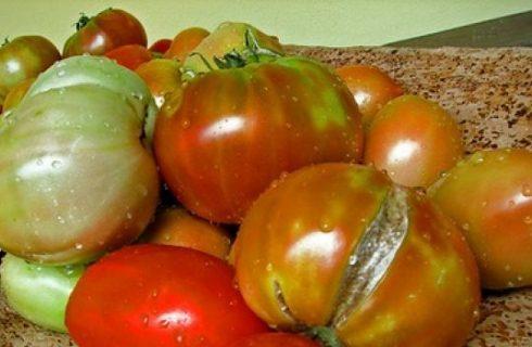 Timballo pomodori e ricotta
