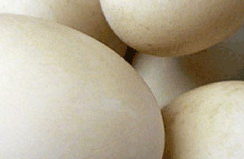 Ricette vegetariane: uova alla turca