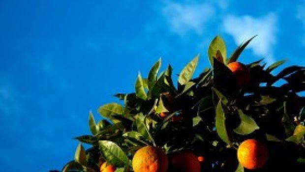 Ricette cinema: L'anatra all'arancia