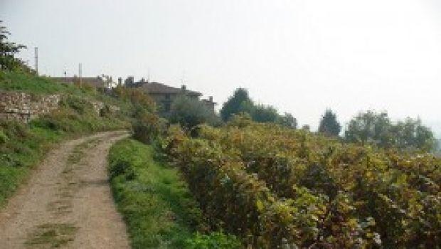 Tours enogastronomici in Italia.
