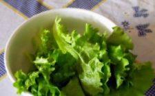Ricetta facile antipasto: insalata con robiola