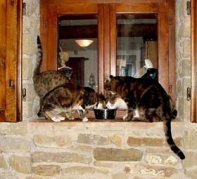 Pollo, tonno, gamberetti, riso, olive, papaya, ananas e mela sono tra i cibi preferiti dai… gatti!