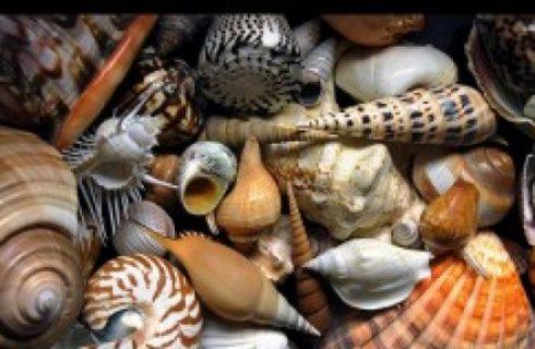 Cucina russa: fantasia di frutti di mare