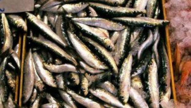 Ricette primi pasta: maccheroncini con le sarde