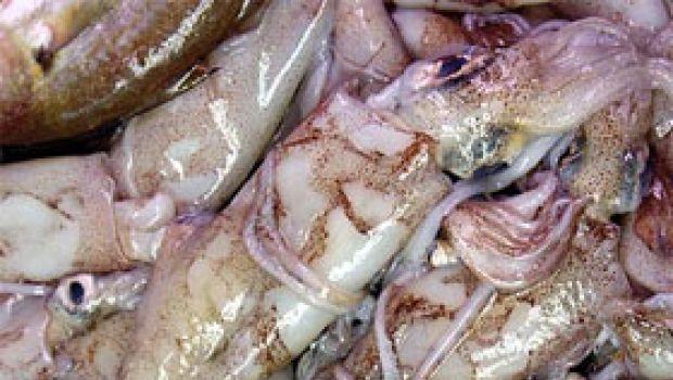 Ricette di pesce: calamari e porri in vinaigrette di limone
