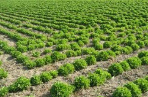 Ricette light: insalata con cetrioli, crescione e miele