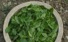 Ricetta dell'insalata autunnale con mele e spinaci