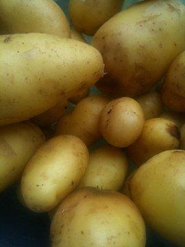 Ricette antipasti per Capodanno: quadrotti di patate con frutta secca