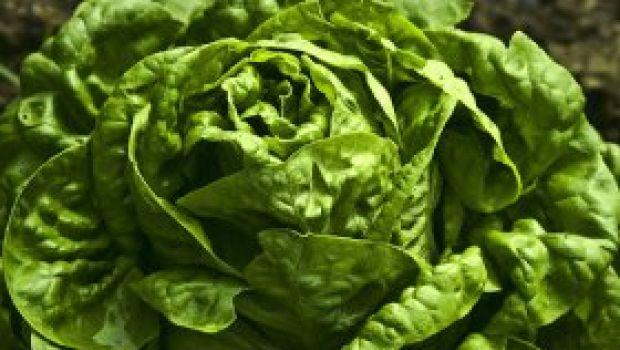 Due insalate con la lattuga