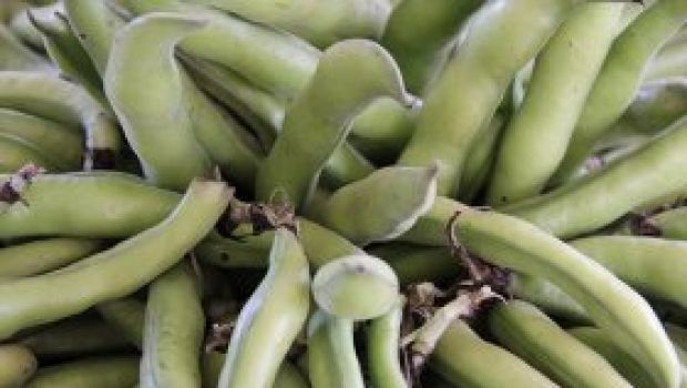 Ricette di stagione: le cipolle ripiene di fave