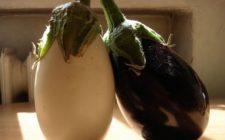 Melanzane: le varietà più coltivate