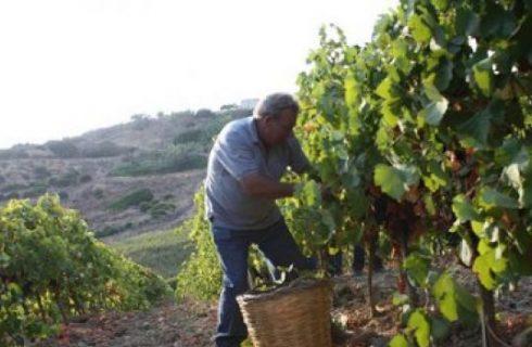 Tempo di vendemmia: il vino ieri