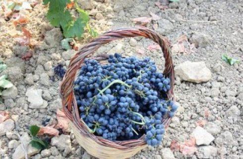 Tempo di vendemmia: il vino oggi