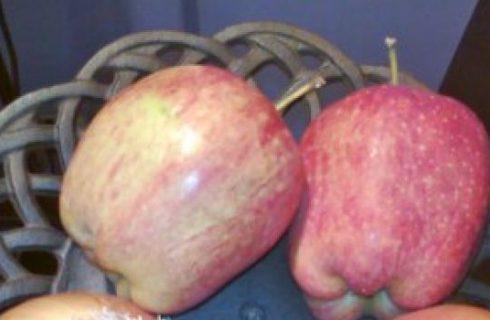 Primi: Zuppa di cipolle e mele.