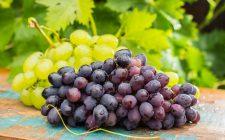 Ricette per Capodanno: il luccio all'uva