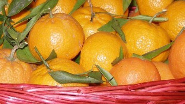 Saper scegliere tra le arance di stagione