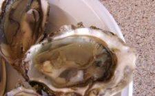 Ricette san Valentino: ostriche con vinaigrette di scalogno e dragoncello