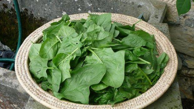 Ricetta dell'insalata di spinaci freschi, patate e gorgonzola