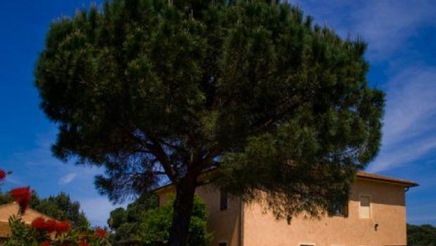 Ristoranti: la Tenuta agricole dell'Uccellina a Magliano in Toscana (Gr)