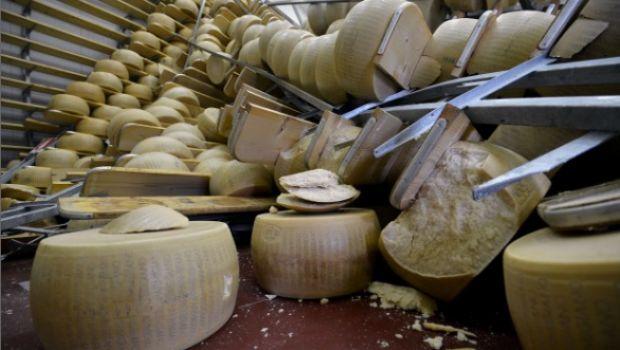 Terremoto: strage di Parmigiano & mucche stressate