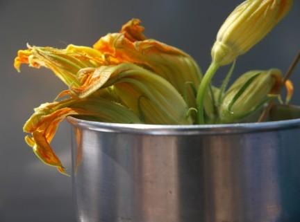 Cucinare i fiori di zucca, le ricette dolci e salate