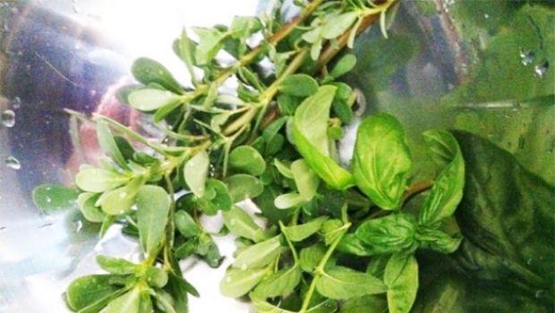 Insalata estiva: la portulaca con farro ed erbe aromatiche, ricca di omega3 e gustosa