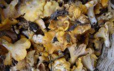 La ricetta dei funghi trifolati come contorno