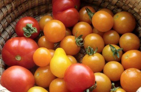 La ricetta dei pomodori scattariciati secondo la tradizione salentina