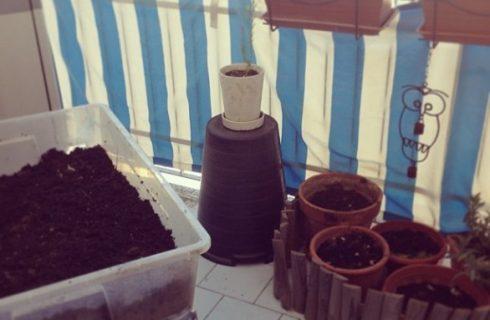 Creare e curare un orto sul balcone