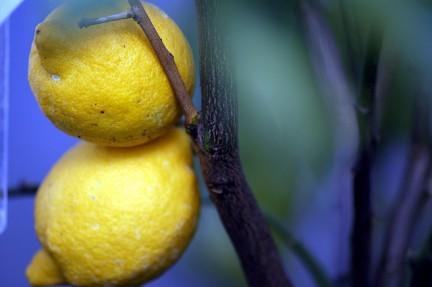 Come preparare la crema al limone senza uova con la ricetta per intolleranti