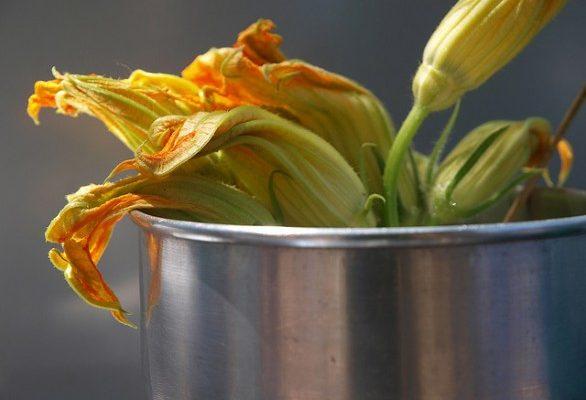 I fiori di zucca ripieni, meglio fritti o al forno? Ecco le ricette