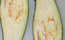 Come fare le barchette di melanzane ripiene di pasta