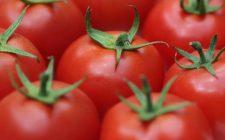 Il pomodoro: proprietà, valori nutrizionali e storia del re rosso della cucina