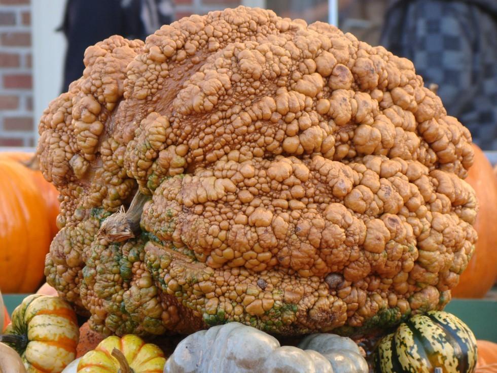 Le zucche giganti - Foto 4